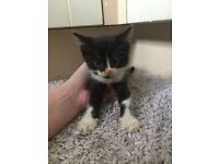 3 beautiful kittens good homes only!