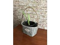 Plant in a basket