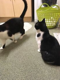Rehoming Two Female Cats. Sisters.