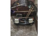 Budgie/bird cage with bird bath toys ect ) £25.00
