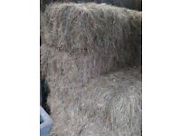SMALL HAY..HEAVY BALES..TOP QUALITY.. WILL DELIVER..