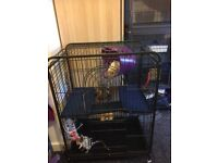 2 male rats & cage