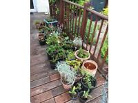 Selection of garden plant free for uplift