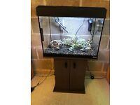 90l fluval Roma fish tank full set up with stand heater light lid filter gravel ornament all in pic