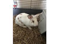 5 month old rabbit