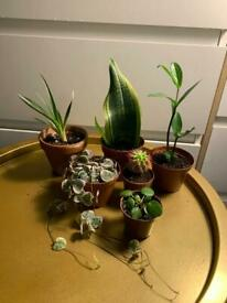 6 indoor/house plant bundle