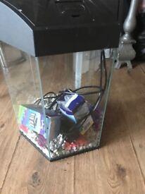 21 litre fish tank