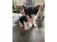 Mixed Kittens
