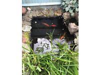 Pond Fish/ Koi (multiple)