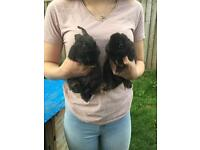 Pair of giant baby bunnies