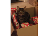 Enzo our much loved tabby missing since Friday 23rd December. Still missing