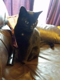 Found Young Female Black Cat, May Have Travelled