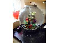 Biorb 30 litre fish tank