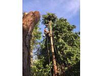 Tree Surgery Edinburgh - Blaikie Tree Services