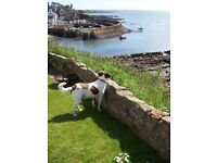 Wanted - Nice, unfurnished house to rent for mature professional & dog. Carms/Pembs, early Feb.