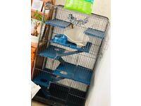 Extra tall chinchilla/ferret/adult rat cage for sale