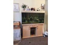 Big fish tank size -1200 x600 x800 depth