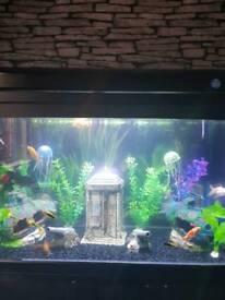 3d 125litre elite fish tank