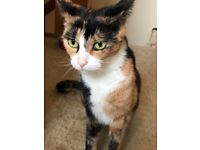 Tortishell cat needing new home