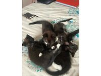 kittens ready to find a new home!