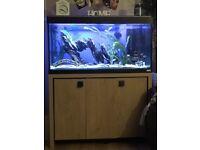 200l fluval fish tank