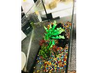 Fish tank and accessories