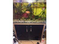 130 litre fish tank