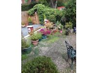 Crossgates Garden Services,Cheap Rates,