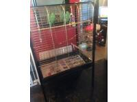 Beautiful ringneck and open top parrot cage