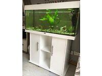 Juwel Rio 180 Aquarium - White