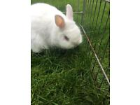 Rabbits to rehome