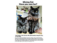 Missing Cat - Have you seen her?
