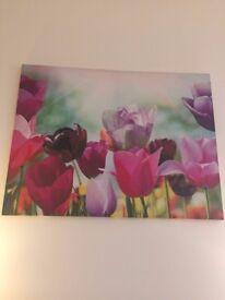 Large Tulip Canvas (88cm (H) x 115cm (W)