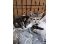 Kittens male and female