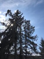 Expert Tree removal now, 587-377-8225.