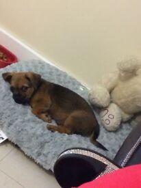 Hi i have a 9 week old pup for sale