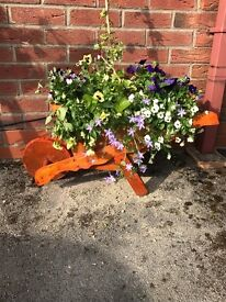 Wooden wheelbarrow stunning with beautiful flowers