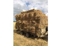 Hay Bales, £3.00 each, 2016 Ragwort free, Barn Stored