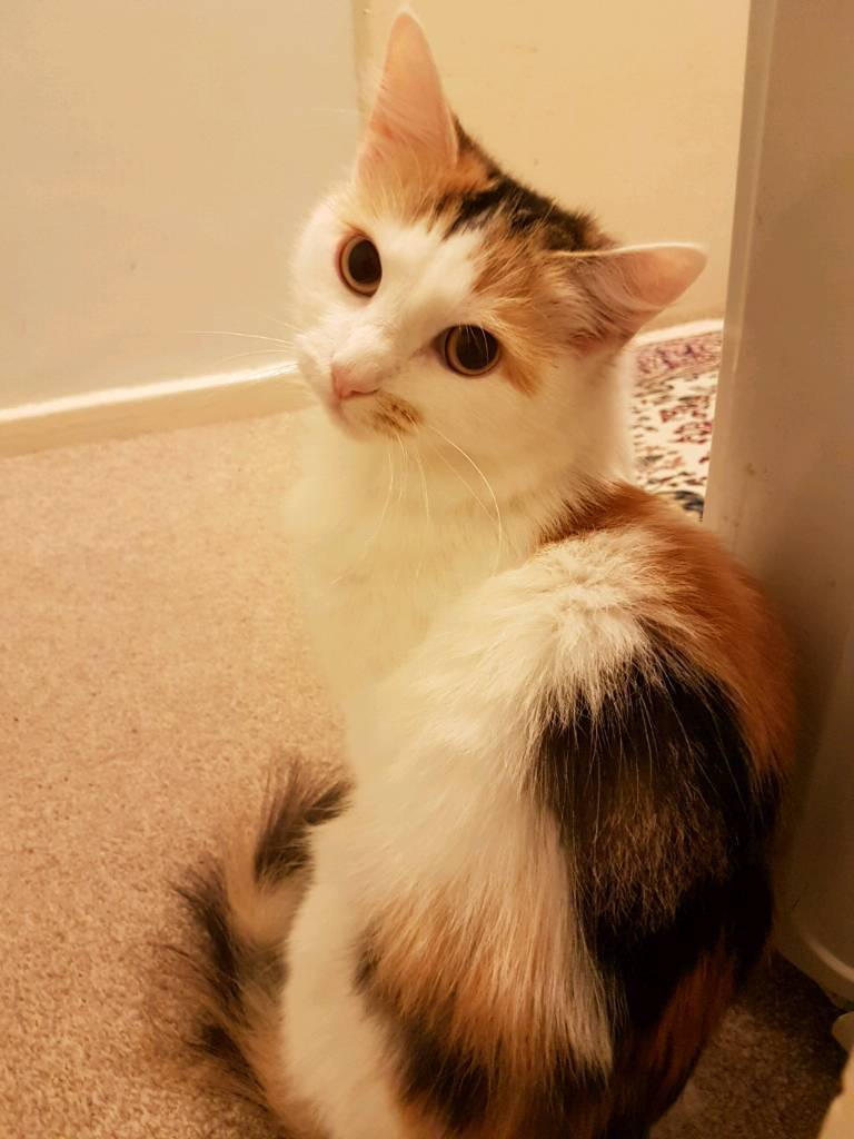 lovely cat for free in horsforth west yorkshire gumtree