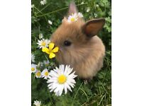 2 Baby Bunnies looking for a loving home together