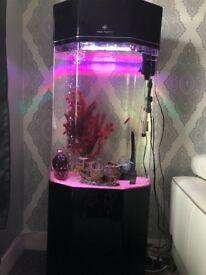 Clear aquatics fish tank
