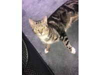 Looking to re home my 14month old male cat