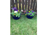 FRESHLY MADE PLANTERS & HANGING. BASKETS