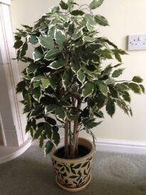 Artificial silk Ficus tree plant with ceramic pot