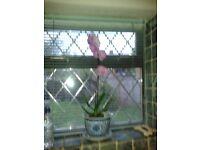 Pot plant holder