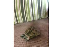 Concrete tortoise