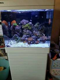 White, Red Sea Max 130D, 130L Marine tank, all in one fish tank, set up with full upgrades.