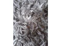 Massive grey silver long hair rug by Indulgence