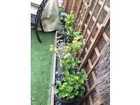 Various Garden plants bundle - MUST GO ASAP