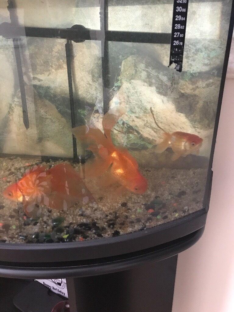 Aquarium fish tank for sale in london - Fish Tank For Sale